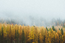 fog over a fall forest