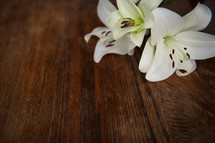 Easter lily on a wood table