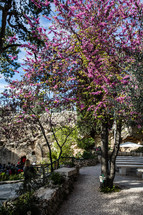 fuchsia flowers on a tree at an outdoor worship area in Jerusalem