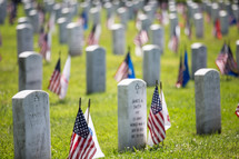 American flags by grave markers at a Veterans Cemetery