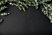boxwood greenery on a black background