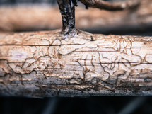 log and branch