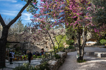 a fuchsia tree and benches at a visitors area in Jerusalem