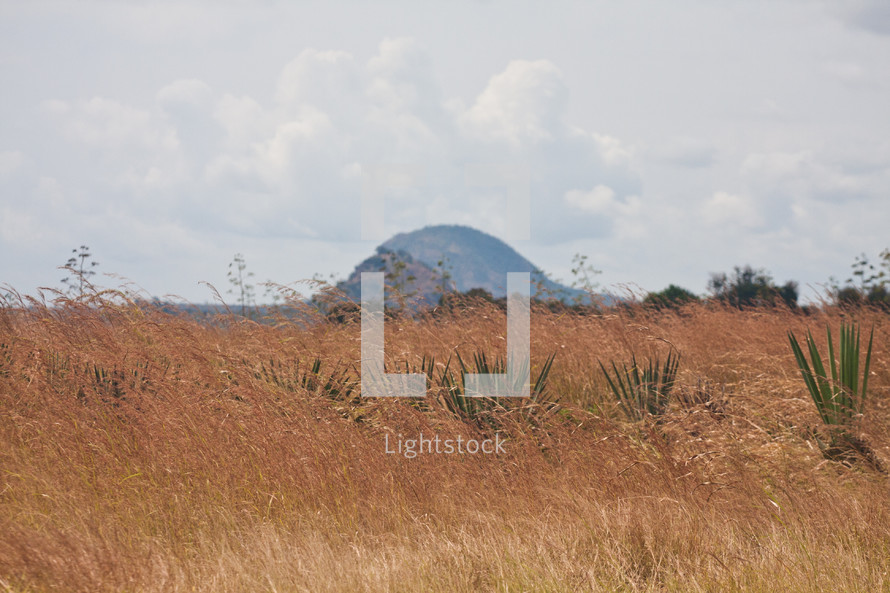 brown grasses and distant hill