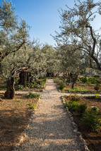 garden path and olive trees