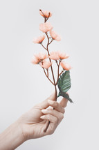 hand holding up a branch of spring flowers
