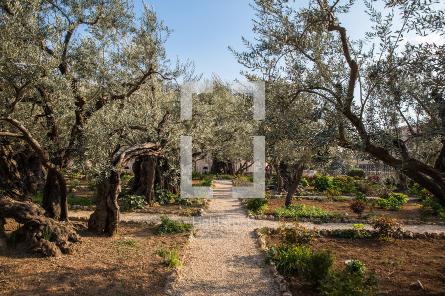 garden path in the holy land