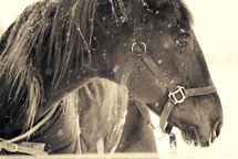 A horse stands in the snow.