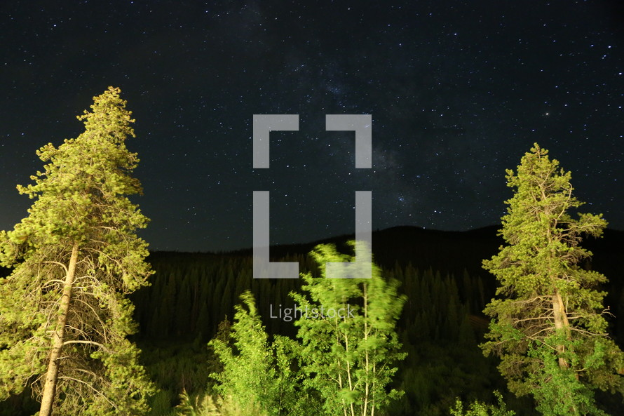 Lit up trees stand in the foreground of a starry sky at night