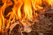 burning pine straw