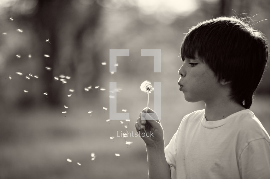 Little boy blows a dandelion