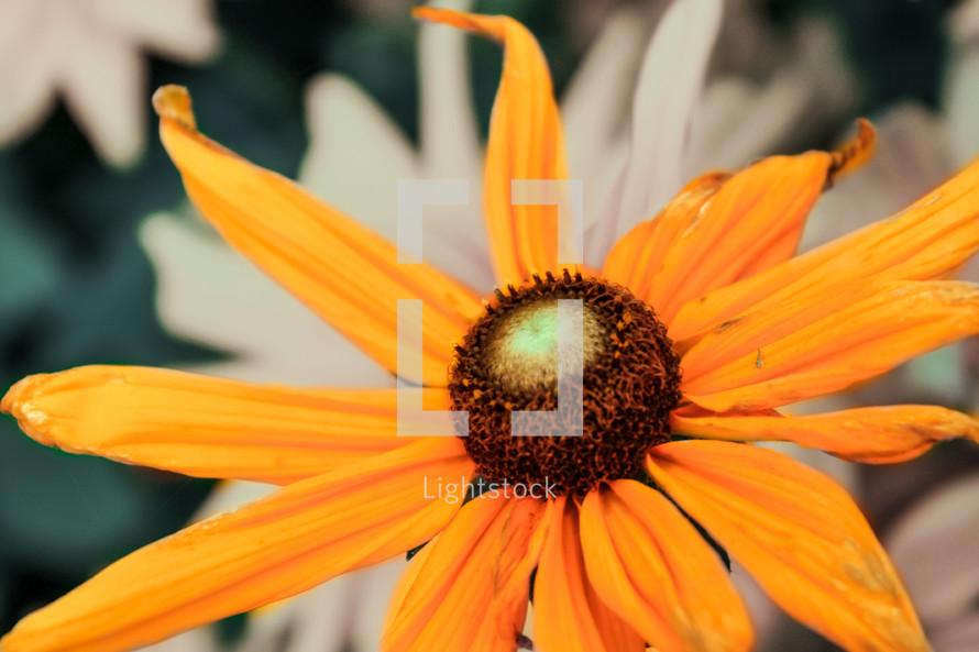 A flower with orange petals