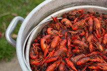 pot of crawfish