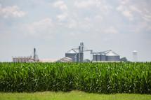corn field and farm