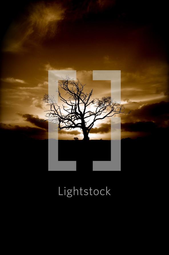 Barren tree at sunset