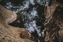 Rushing water against cedar trees.