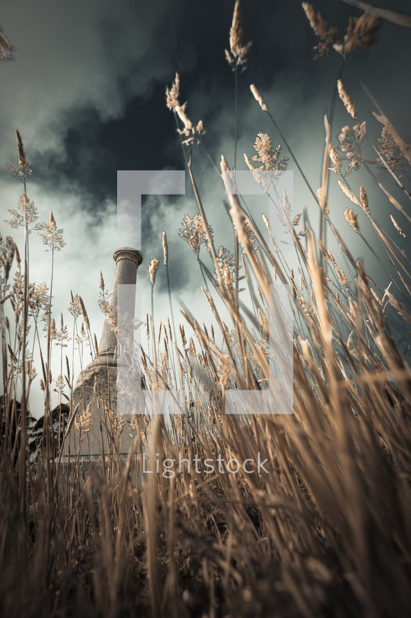 tombstone trough tall grass