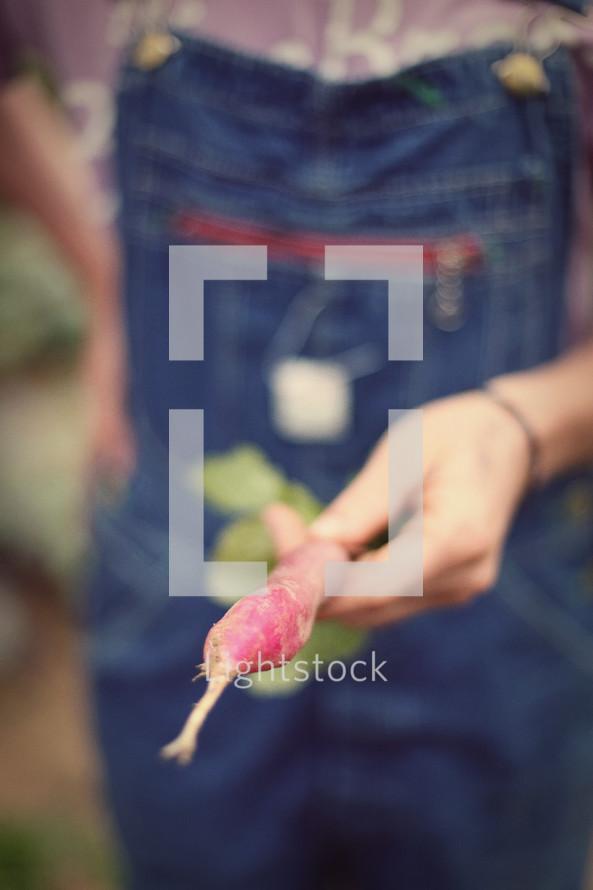 Hand holding a radish root.