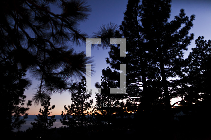 Silhouette of pine trees on hillsdide at dusk.