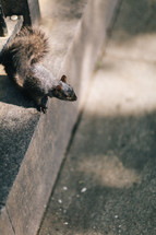 a squirrel on a step