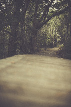 An empty road through a forest.