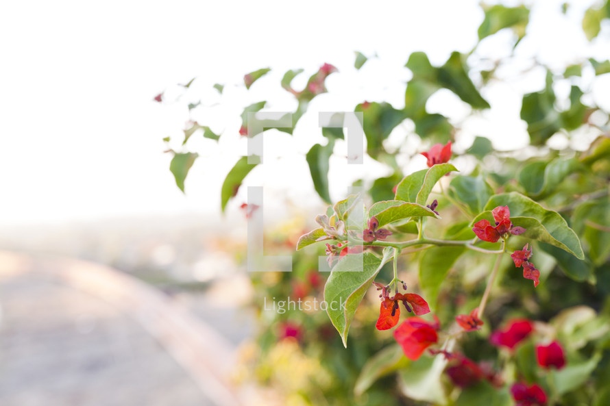 red flowers on a bush