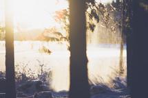 shadows, tree trunks, winter, snow, outdoors