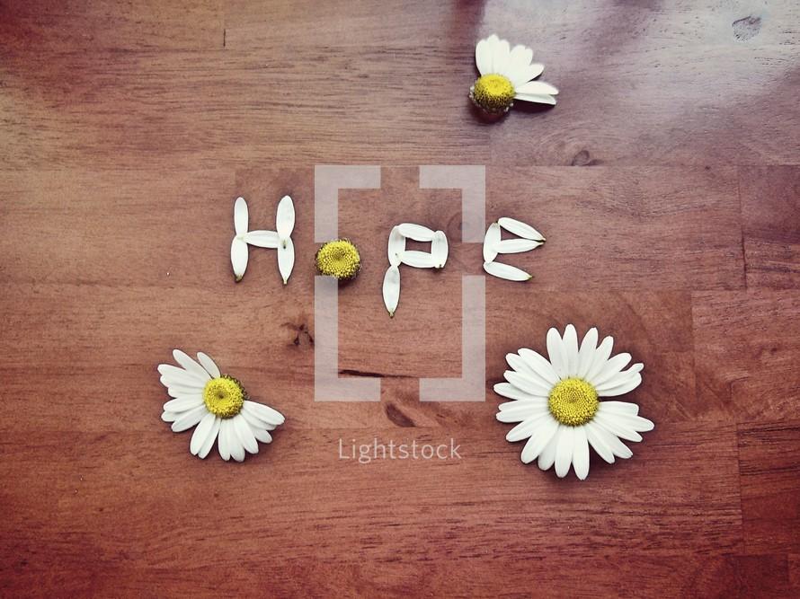 hope in daisy petals