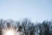 tops of winter trees