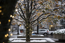 lights on a tree covered in snow