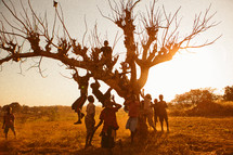 Children climbing a tree in Africa.