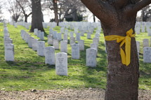 yellow bow around a tree at Arlington National Cemetery