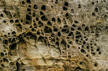Rock with holes caused by erosion.