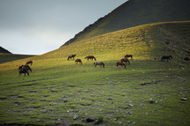 horses grazing on a mountainside