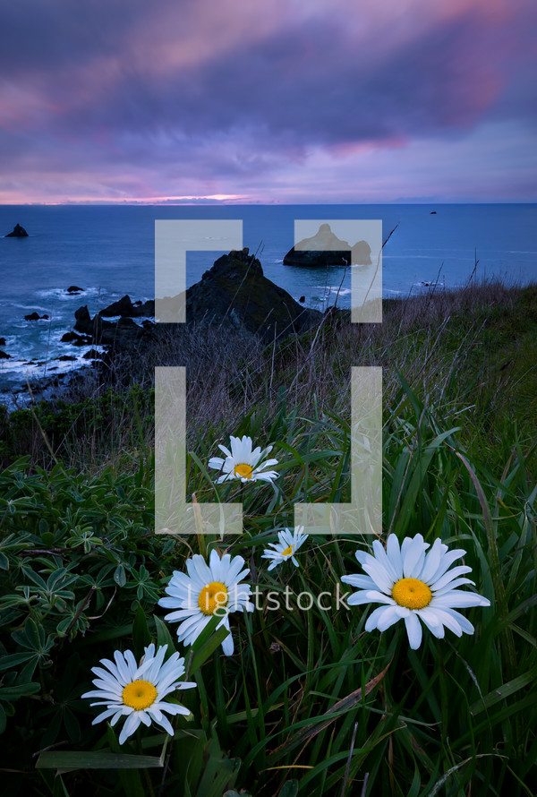 daisies and shoreline view