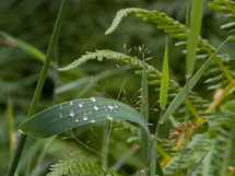 water dew drops on a blade of grass
