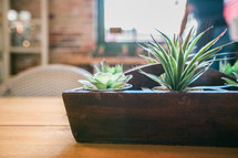 house plant centerpiece on a wood table