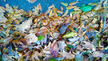 A pile of leaves covers the ground with various colors as the seasons change and weather turns cold showing the leaves decaying and changing colors as they fall from the trees around October and Halloween each year.