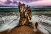 battered tree stump on a beach