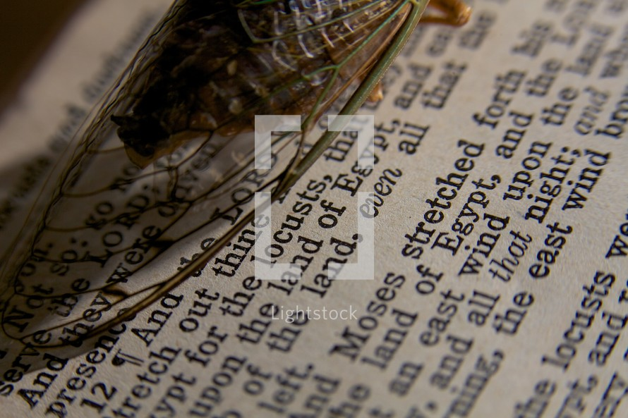 A locust rests on the pages of the BIble - Exodus 10:12