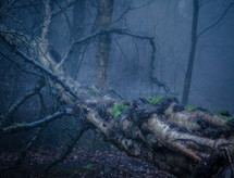fallen tree in a misty wet forest