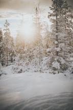 sunburst over a winter forest
