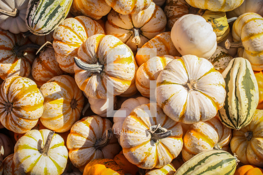 pile of striped pumpkins