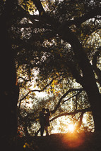 couple hugging under trees and the glow of the sun