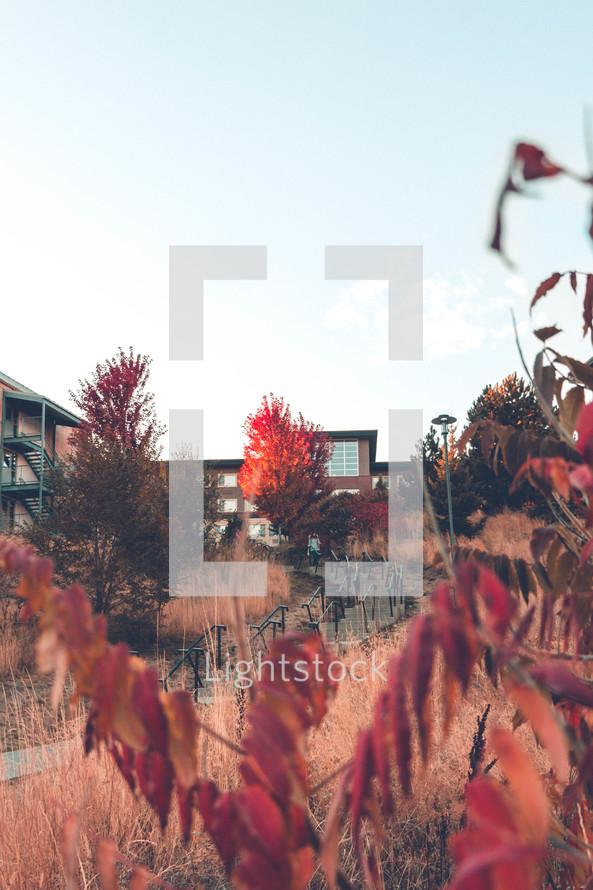 fall trees and condos