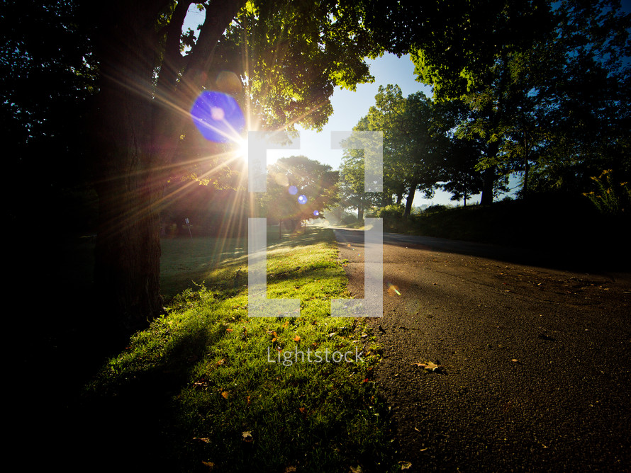 sunlight over a path