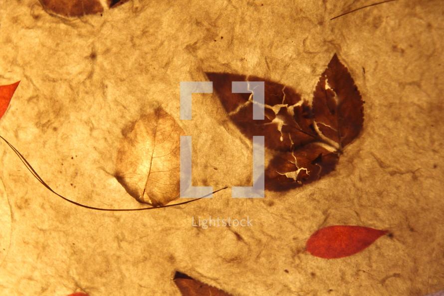 leaf imprints on paper