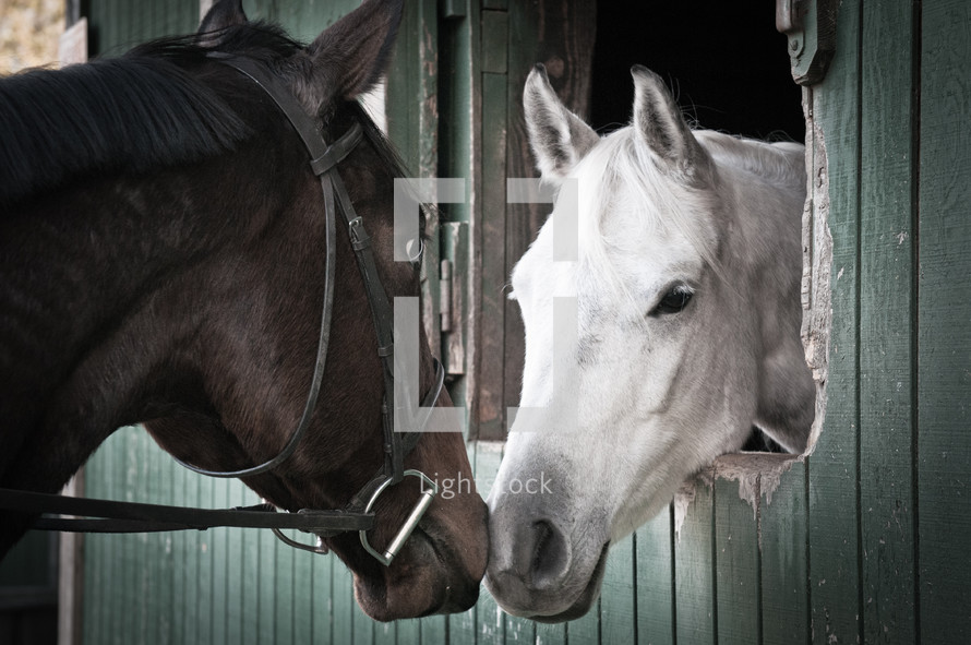 Two horses touching noses in a stable.