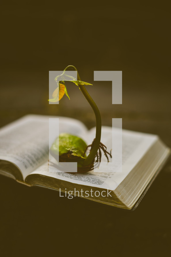 sprout in the pages of a Bible