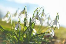white flower in sunlight